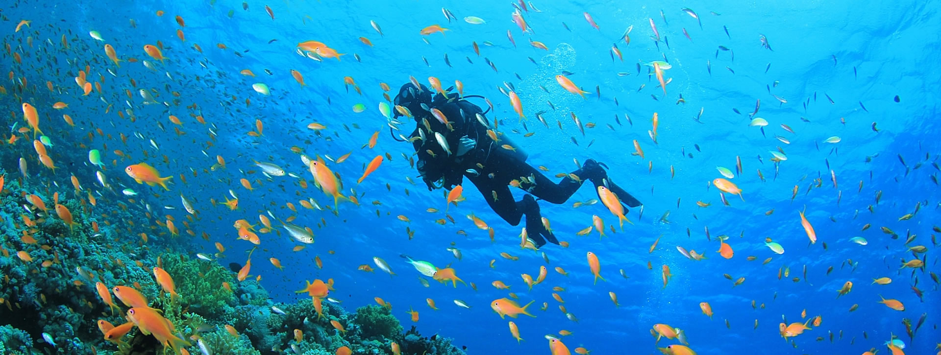 Red Sea - Dive Sites